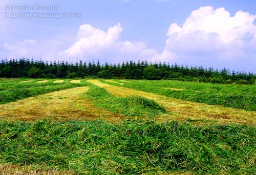 The grass cut in our field
